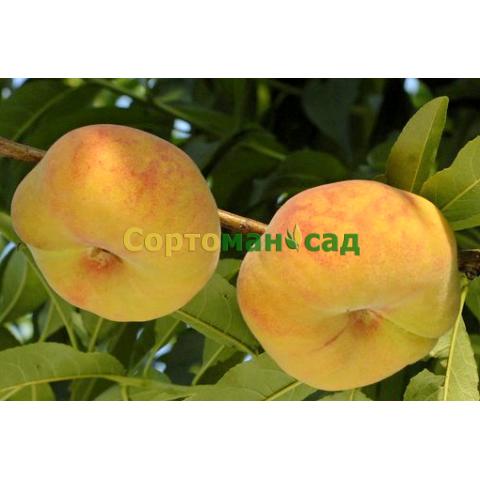 Персик инжирный (плоский)  Бельмондо