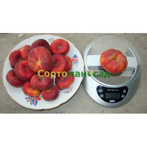 Персик инжирный Свит Ринг  /Sweet Ring/ - (Cладкое Кольцо)