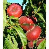 Персик инжирный (плоский) Уфо 5