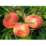 Персик инжирный (плоский) Уфо 3